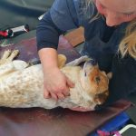 In House Physiotherapy from MyVet Physio