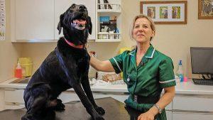Accredited Higher Certificate in Canine Health & Welfare
